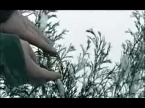 Gianna Nannini - Sei Nell'Anima (VIDEOCLIP)