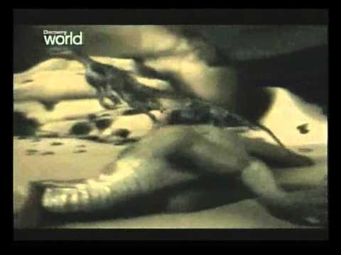 youtube filmek - A dinoszauruszok végnapjai (part 5)