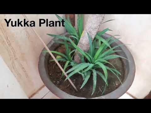 Best Plants To Grow For Beginners || Fun Gardening
