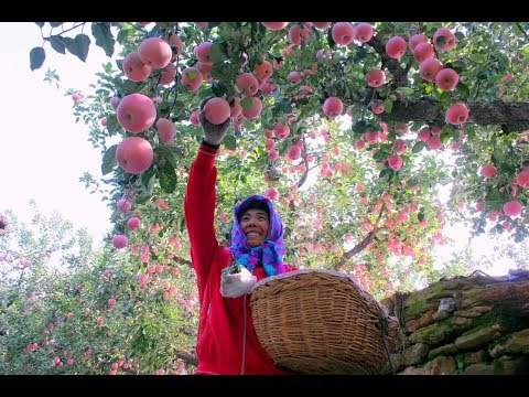 LIVE: A journey of apples from China to Thailand and Malaysia #XinhuaGlobalLive