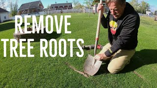 How to remove EXPOSED TREE ROOTS in the lawn. ULTRA SATISFYING