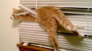 Cats, the funniest pets that make us laugh - Funny cat & kitten compilation