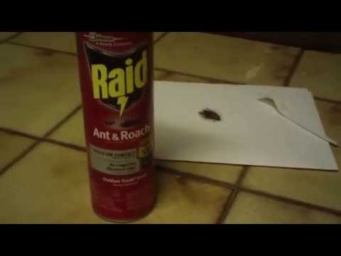 This is my review on Raid Roach Killer
