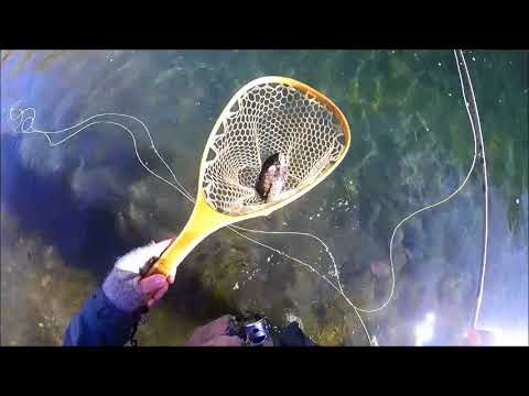 Fly Fishing Catch And Release At Bennet Spring