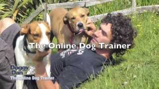 How To Raise The Perfect Dog - The Online Dog Trainer
