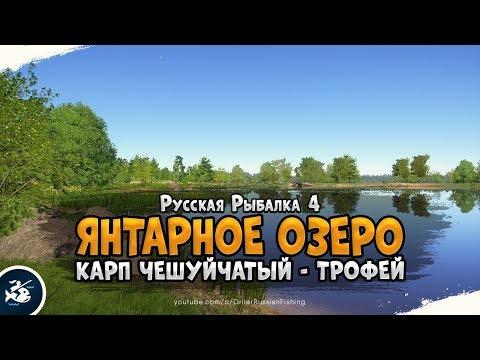 Трофейный Карп Чешуйчатый • Русская Рыбалка 4