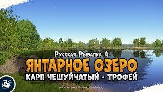 Трофейный Карп Чешуйчатый Русская Рыбалка 4