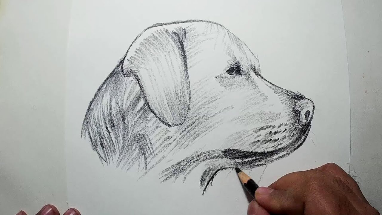 How to draw a dog head easy pencil drawing