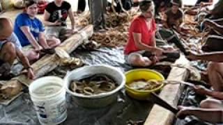 Making (Beating) Tapa Cloth in Vava'u, Tonga.