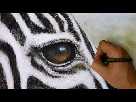 how-to-draw-a-zebra---realistic-zebra-face