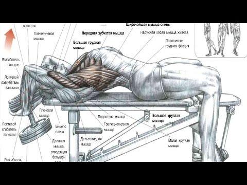 Какие мышцы тренировать вместе
