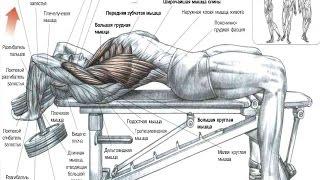 видео ГРУДНЫЕ МЫШЦЫ. 10 ФАКТОВ. Тренировки, Анатомия, Биомеханика