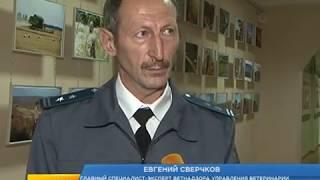 В Курской области не хватает ветврачей