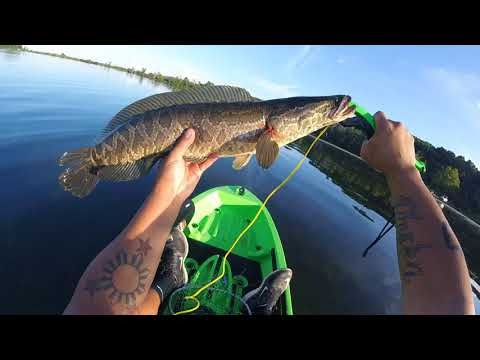 Aquia Creek 6 Snakeheads In One Day