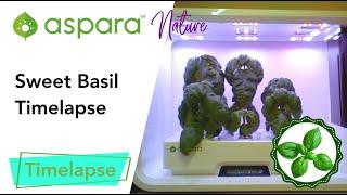 aspara™ nature basil timelapse