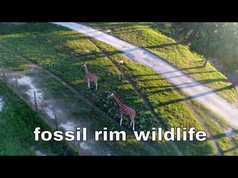 fossil rim wildlife center glen rose texas SAFARI IN TEXAS GLEN ROSE PARK WILDLIFE FOSSIL RIM 4K