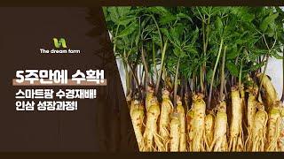 스마트팜 수경재배  [ 인삼 성장과정 영상 ]