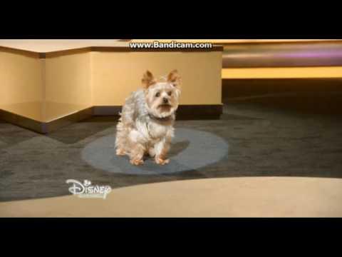 Tiny - Right Where I Belong - Pup Star