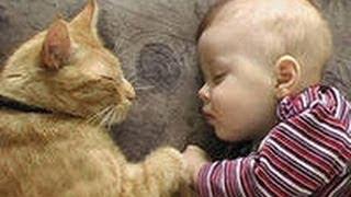 Кот убаюкивает плачущего ребенка
