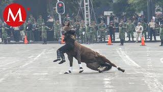 Jinete y caballo caen en desfile de la Revolución Mexicana