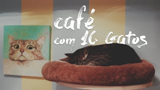 Tomando café com 16 gatos (Chat Mallows Paris)