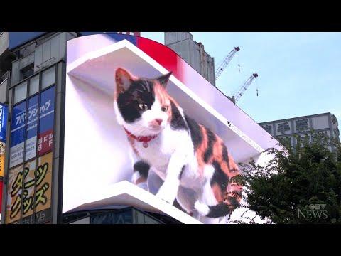Giant 3D cat billboard dazzles in Tokyo