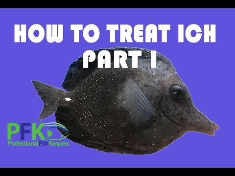 HOW TO TREAT ICH - WHITE SPOT DISEASE (Cryptocarion Irritans) Part I