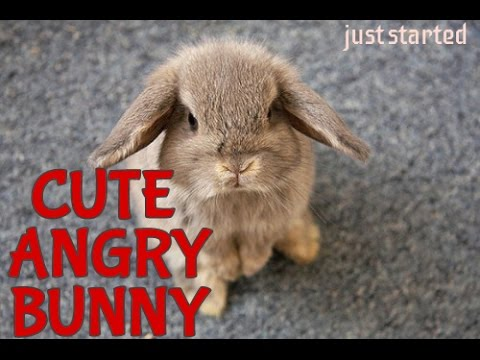 CUTE ANGRY BUNNY - JUST STARTED - YouTube