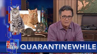Download Quarantinewhile... Chicago Gambles On Cats To Rid The City Of Rats