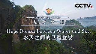 《美丽中国》 水天之间的巨型盆栽 | CCTV
