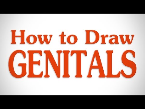 How to Draw Genitals