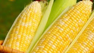 بعد معرفة هذا الخبر ستكثرون من أكل الذرة المسلوقة!