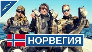 Подводная охота в Норвегии 2017. Берген, рыба, цены.