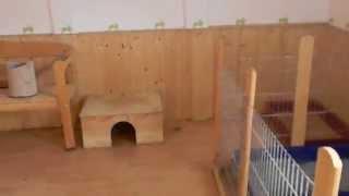 Kaninchen  Wg
