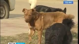 Чипированная собака родила 8 щенков в Иркутске  Сколько город тратит на стерилизацию бездомных живот