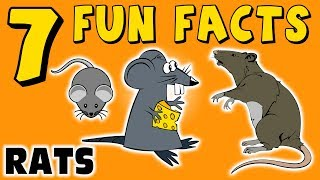 7 Fun Facts About Rats! Rat Facts For Kids! Learning Colors! Rodents! Pets! Funny! Sock Puppet!