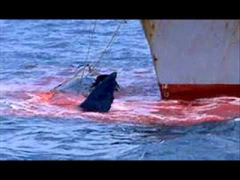 Endangered Animals- Blue Whale - Mansour - YouTube