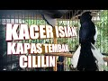 Masteran Kacer Full Isian Cililin Kapas Tembak Pikatan(.mp3 .mp4) Mp3 - Mp4 Download