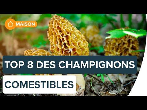 Identifier les champignons comestibles | Futura