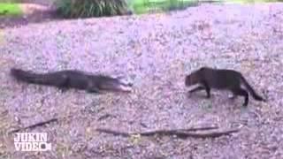 Кот нападает на крокодилов