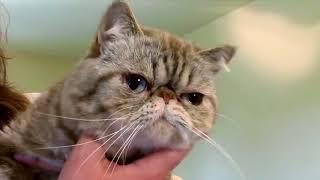 Мой питомец: Как приучить кота к лотку?