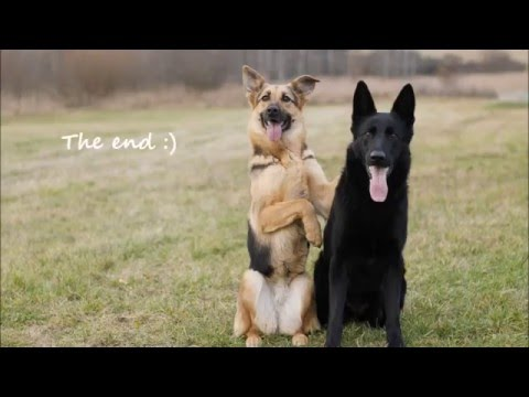 ♥ Dogfrisbee tricks by German Shepherds Britney & Magie ! ♥