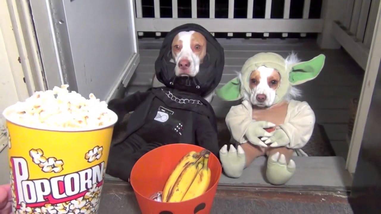 смешные картинки собаки и кошки