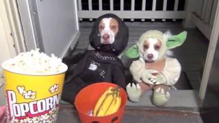 Смешные кошки и собаки в костюмах