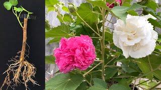 Como Propagar Flores Com Ramos
