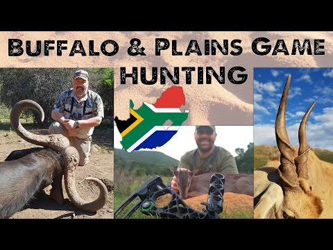 Hunt Buffalo and Plains Game in the Eastern Cape, with the Luppino Brothers and Stompiesland Safaris