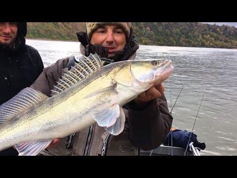 Ловля судака на спиннинг или трофейная рыбалка в марте