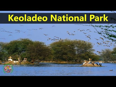 Best Tourist Attractions Places To Travel In India | Keoladeo National Park Destination Spot