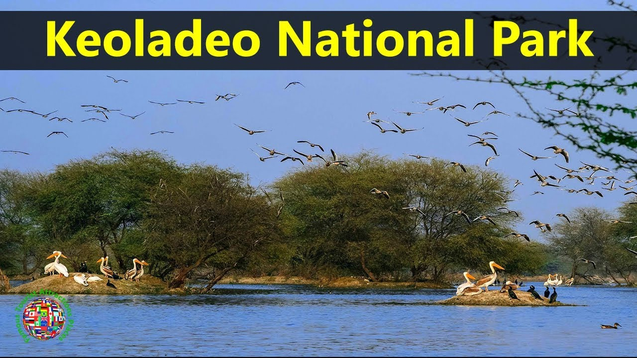 Best Tourist Attractions Places To Travel In India Keoladeo National Park Destination Spot