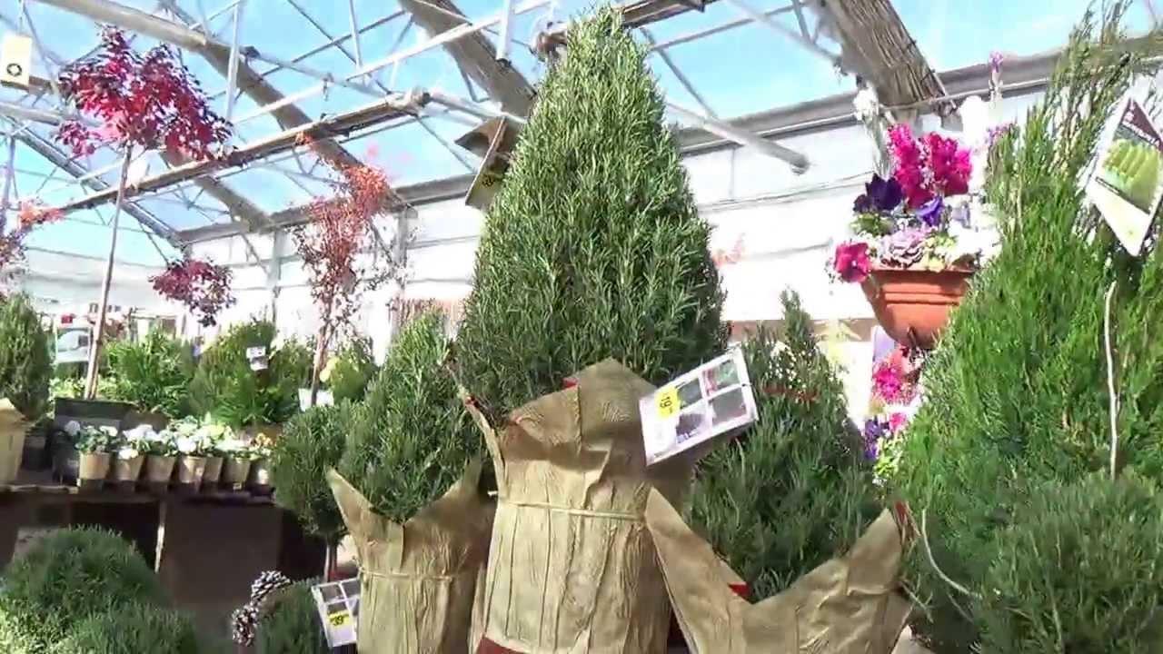 Rosemary Christmas Holiday Tree shapes - YouTube